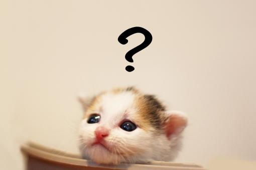 写真素材:猫:はてな